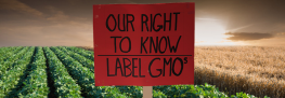 Lobbyists at it Again: GMO Labeling Fight Likely to Resume in New Year