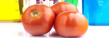 World Health Organization Only Requires 90 Days 'Safety Testing' on GMOS