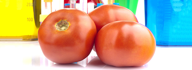 gmo-tomatoes-food-735-270