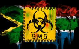 gmo Africa
