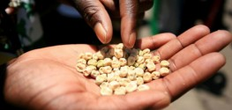 Monsanto Caught Pushing GMOs on Independent African Farmers