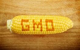 Former EPA Scientist Speaks Out Against GMOs