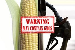 gmo corn gas