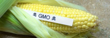 GM Foods are Inherently Unsafe, Warns American Academy of Environmental Medicine