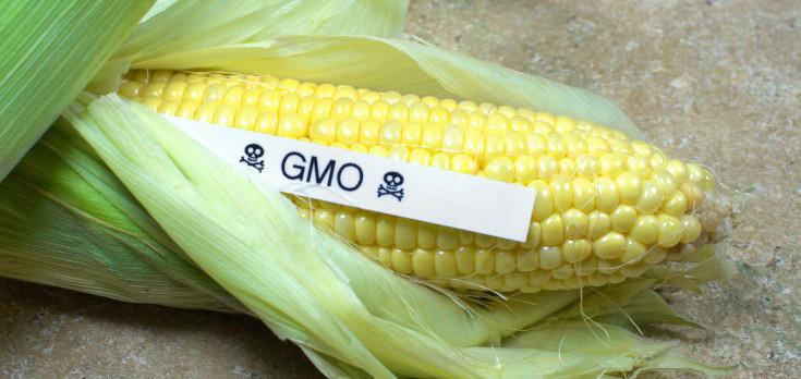 gmo_corn_hazard_735-350