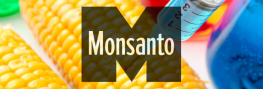 Prediction: New Monsanto-Backed Study to Find GMOs 'Perfectly Safe'