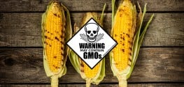 Boycott, Label or Ban? How Best to Fight the Spreading of GMOs