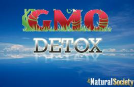 gmo detox