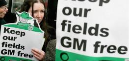 This GMO Debate Shows How GMOs are Failing