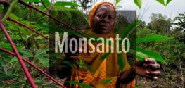 New 'Monsanto Law' in Africa Would Force GMOs on Farmers