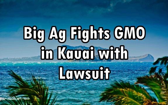 Kauai gmo