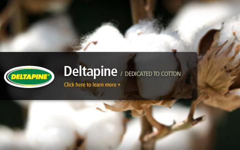 cotton delltapine