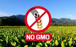 Hawaii Claims Huge Win Against Monsanto at GMO Ground Zero