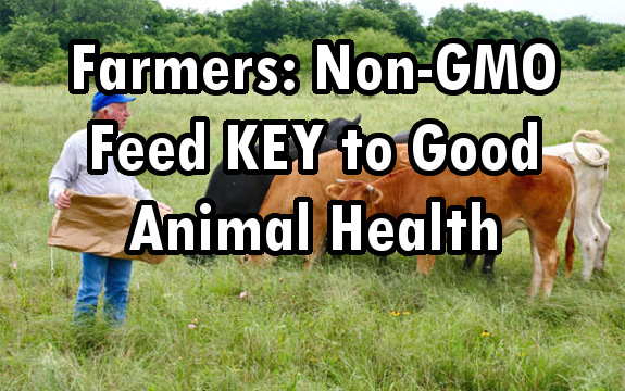 non-gmo animals