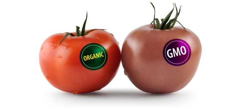 gmo_organic_food_label_735_350