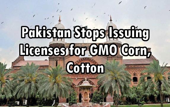 Pakistan GMO