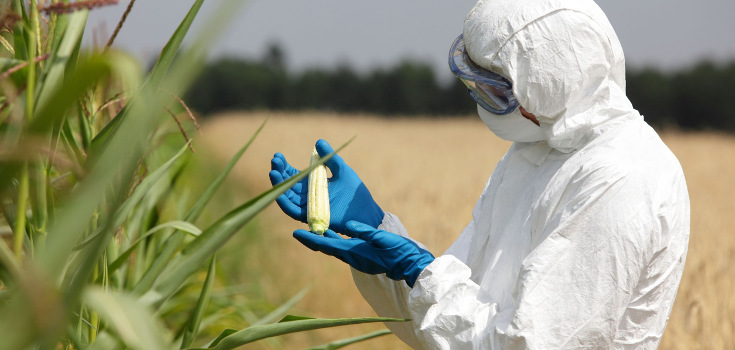 gmo_pesticides_corn_crop_man_735_350