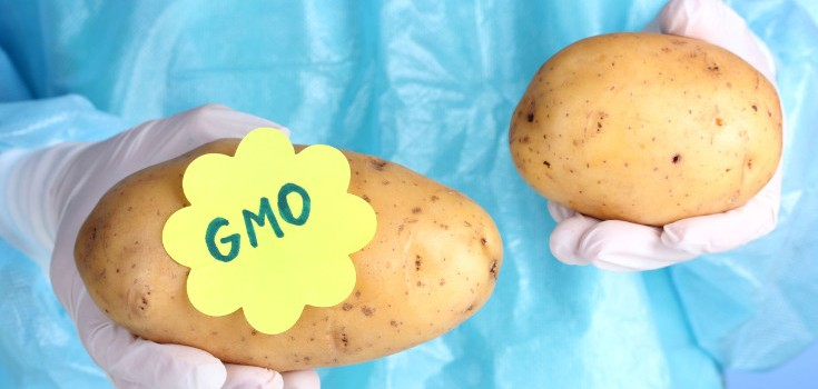 gmo vs organic essay Gmo essay - order a 100% authentic, plagiarism-free paper you could only imagine about in our academic writing service essays & dissertations written by professional writers confide your dissertation to professional scholars employed in the platform.