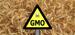 Russian Deputy Prime Minister: GMOs Will NOT be Tolerated