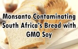 GMO bread