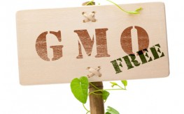 Non-GMO Rallies Spring up Nationwide for World Food Day
