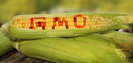 Hungary Commits to GMO-Free Farming