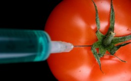 tomato being injected