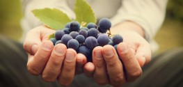 Monsanto's Pesticide May Kill $2 Billion Wine Industry