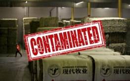 China hay alfalfa GMO