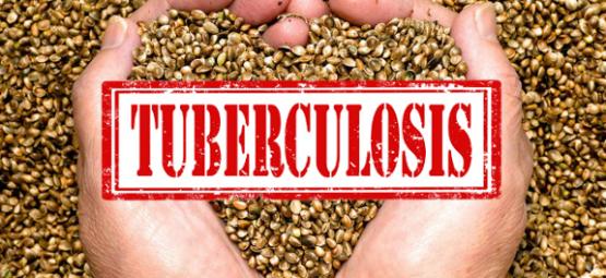 hemp seed tuberculosis