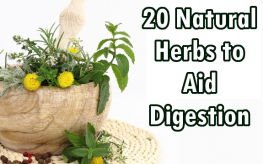 herbs digestion