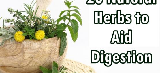 herbs digestion