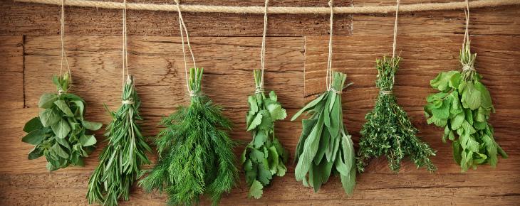 herbs_line_730_290