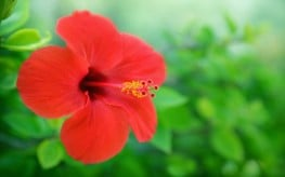 Hibiscus Among Foods that Help Lower Blood Pressure