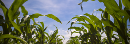 Video: This is How Monsanto's GMOs Could Be Banned