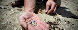 Microplastics in the Ocean are Killing Baby Fish, Study Finds