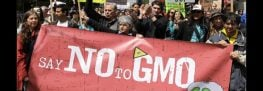 Regulatory Loophole Allows GMO Products to be Marketed as Non-GMO