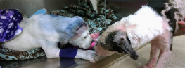 How 2 Rescue Dogs Became Best Friends and Viral Stars