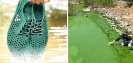 These Shoes are Made of Algae, and They Help Clean This Lake in China