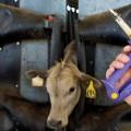 image-antibiotics-livestock-14521n1-735-350