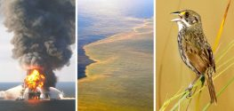 Oil from BP Spill Has Been Found in Terrestrial Birds
