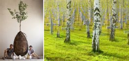 Italian Designers Bank on Future Cemeteries Filled with Trees, not Coffins