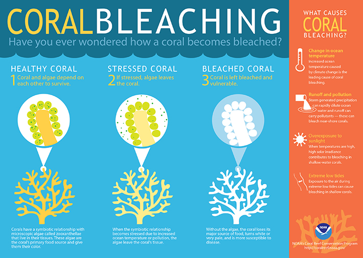 image-coralbleaching-large-710