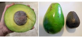 "Have You Heard of the Low-Fat ""SlimCado?"" Avocado Incoming!"
