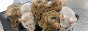 A Scientific First: Lab-Grown Eggs Produce Healthy Mice
