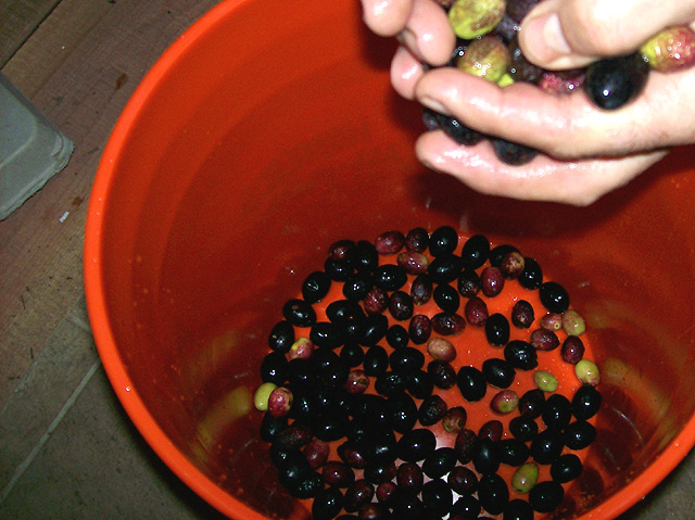 image-olive-oil-making