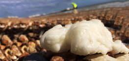 Pics: Giant Globs Of Palm Oil Wash up on UK Beaches, Sickening Dogs
