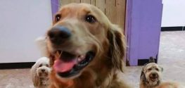 Dog Escapes Home to Hang Out with Pals at Doggy Daycare