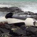 image-whale-dead-uk-735-350