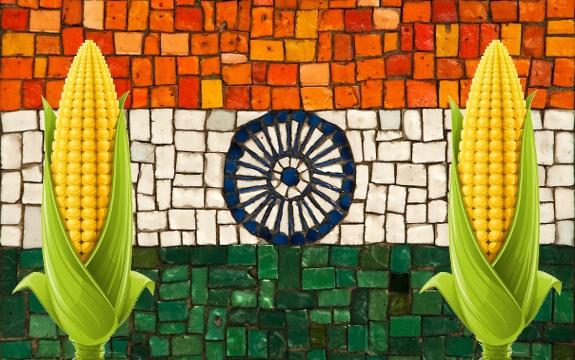 India GMO